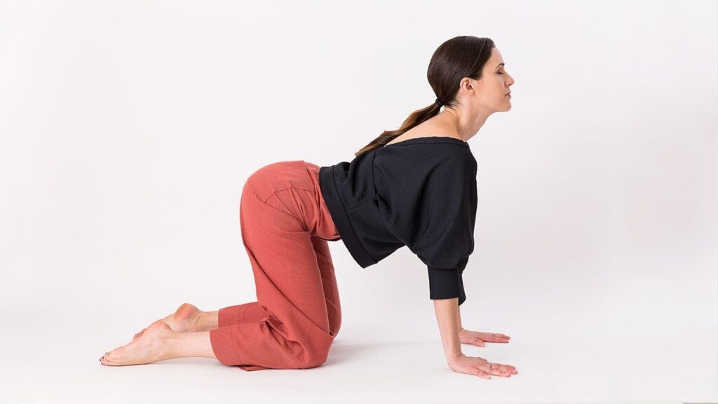 Double Seated Cat Cow Pose